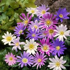 other fall planted bulbs for sale buy flower bulbs in bulk save