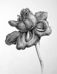 dianne sutherland more on drawing graphite tonal drawing of a