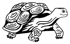 11 images of turtle mola art coloring pages aboriginal art