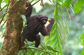 new species of primate is named after u0027star wars u0027