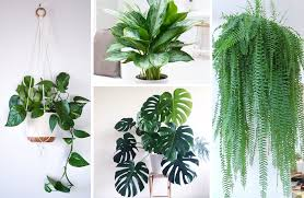 best house plants best indoor houseplants how to care for each 11 display ideas
