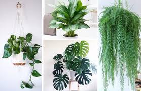 indoor plant display best indoor houseplants how to care for each 11 display ideas