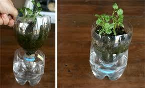diy self watering herb garden homemade self watering pots for herbs it s working herbs