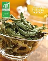 vervenne cuisine verveine odorante bio truc et astuce en cuisine recette facile