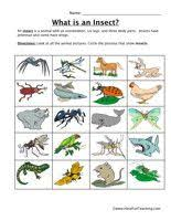 insects worksheets free ideas garden amp insects insect