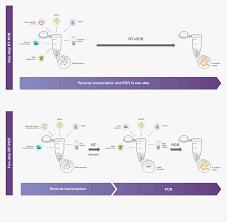 bureau de la pcr transcription applications thermo fisher scientific