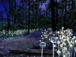 coming attraction light at longwood gardens a stunning