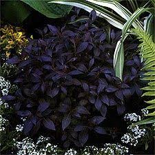 best 25 purple garden ideas on pinterest purple clematis