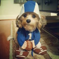 dog candy corn witch costume football costume dog football costume costumes and dog