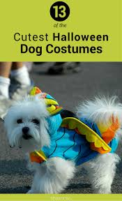 target halloween dog costumes dog costumes fur ever