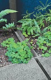 pacific northwest native plants photo 5 of 12 in landscape design for all climates dwell