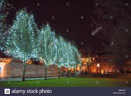 dudley council house lit up at and a row of trees in priory