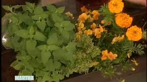 Home Garden Design Videos by Video Herb Garden How To Martha Stewart