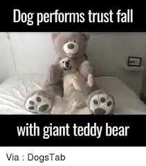 Meme Teddy Bear - 25 best memes about giant teddy bear giant teddy bear memes