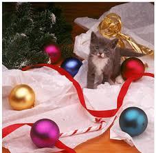 cute christmas kittens 26 pics u2013 1funny