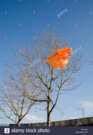orange carrier bag in tree stock photo royalty free image
