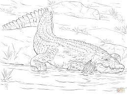 extraordinary american alligator coloring pages alligator