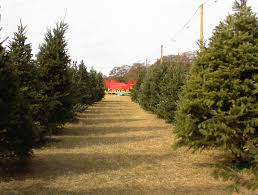 flower mound christmas trees com dallas area christmas tree