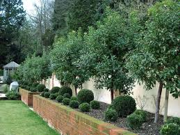 albero giardino gli alberi da giardino alberi alberi da giardino