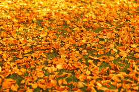 autumn leaves on the ground free stock photo public domain pictures