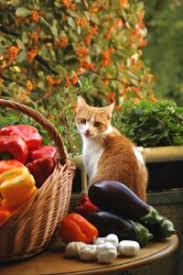 Keep Cats In Backyard How To Keep Cats In And Out Of The Garden Off The Grid News