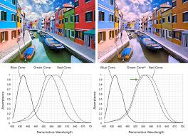 Examples Of Color Blindness Gurney Journey High Tech Glasses May Help Remedy Color Blindness