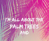 palm trees pictures photos images and pics for