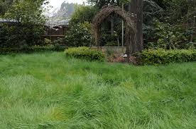 california native plants for sale hey california you can still have a lawn here are five water