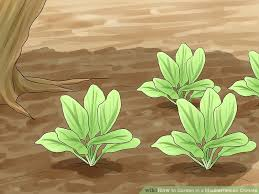 how to garden in a mediterranean climate 14 steps with pictures