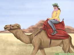 How To Make A Hard Hat More Comfortable How To Ride A Camel 12 Steps With Pictures Wikihow