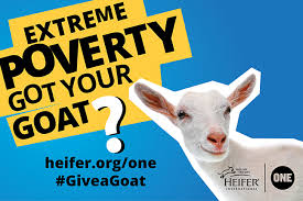 heifer international heifer international and the one caign create initiative to end