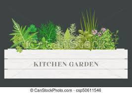 origan frais en cuisine verdure cuisine ferme ciboulette bois text box vecteur