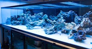 Reef Aquascape Designs Aquascape Archives Reef Builders The Reef And Marine Aquarium Blog