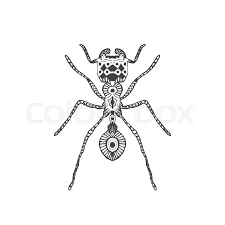 zentangle stylized ant animal collection hand drawn doodle