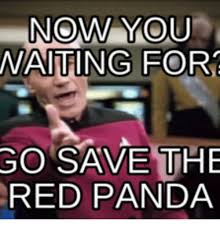 Red Panda Meme - now you waiting for go save the red panda red pandas meme on me me