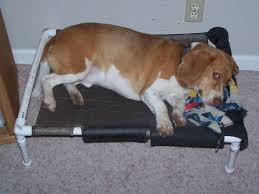 Homemade Dog Beds Pvc Elevated Dog Bed 3 Steps