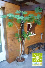 Inside Plants by 423 Best Plantes Intérieures Indoor Plants Images On Pinterest