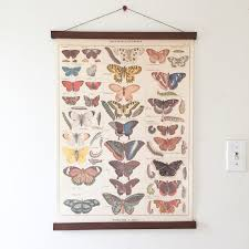 vintage butterflies illustration with magnetic poster hanger