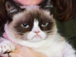 Frown Cat Meme - grumpy cat from feline meme to brand purrrfection digiday