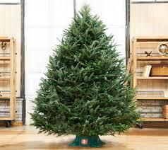 week 12 2 plow hearth fresh cut 7 5 frasier fir