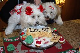 birthday cakes for dogs homemade but keep healthy u2014 wow pictures