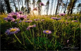 photographing flowers with ultra wide lenses nature u0027s best by