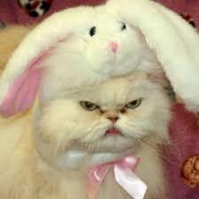 Grump Cat Meme - grumpy cat memes home facebook