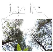 Forests Free Full Text Estimation Of Vegetation Cover Using