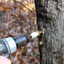 Backyard Maple Syrup by How To Make Your Own Backyard Maple Syrup Watershed Post