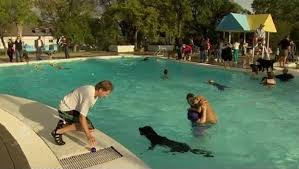 affenpinscher calgary pups play in public pools at calgary u0027s dog day dogtime