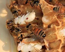 the colony killing mistake backyard beekeepers are making the