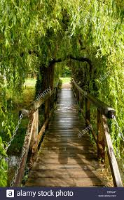 view of small pedestrian wooden bridge a willow tree in