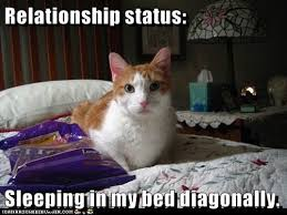 Animal In Bed Meme - relationship status sleeping in my bed diagonally lolcats lol