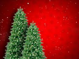 christmas tree prices christmas tree prices rise amid post recession scarcity